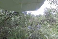 22. Tree snapshot